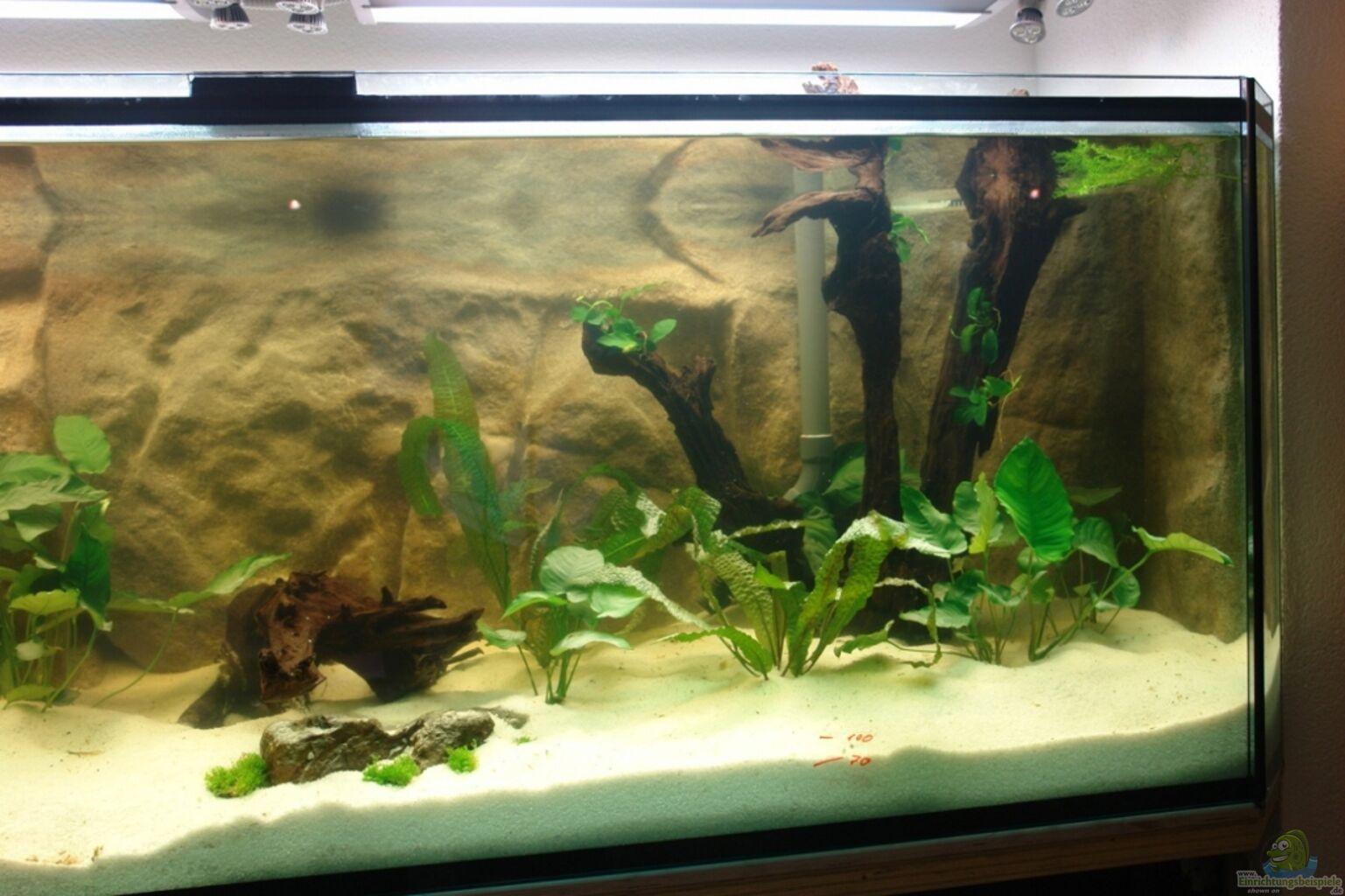 aquarium von paul kerschbaumer s dtirols amazonas. Black Bedroom Furniture Sets. Home Design Ideas