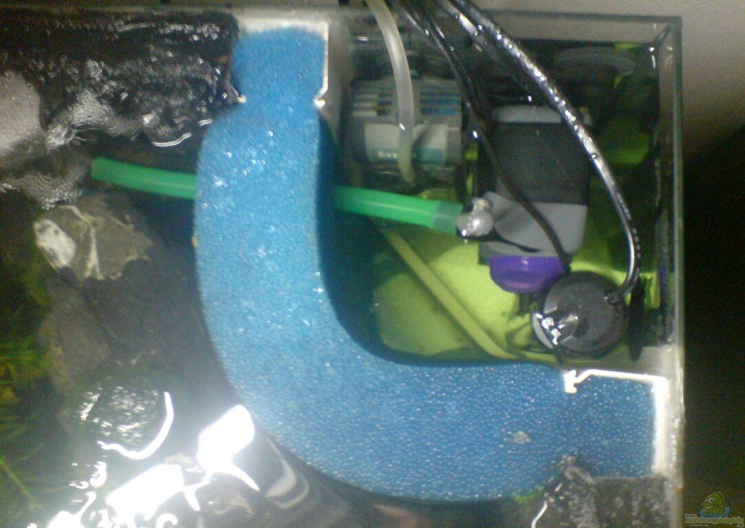 aquarium von newbie newbie s waterworld. Black Bedroom Furniture Sets. Home Design Ideas