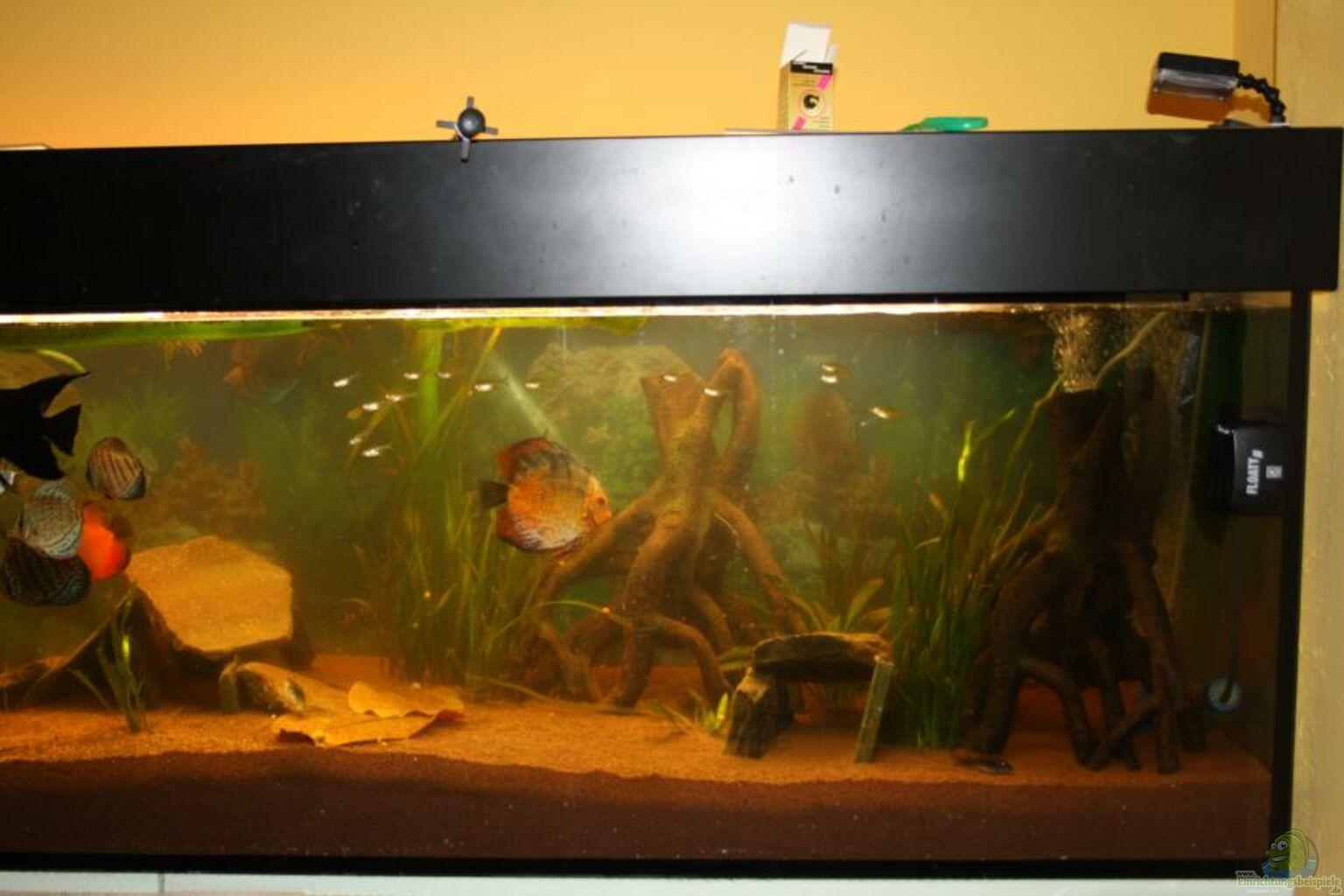 Aquarium von fenrier diskus for Diskus aquarium