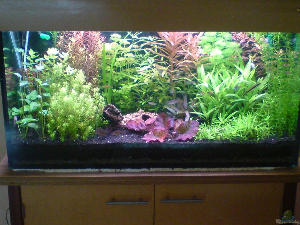 Aquarium von achim stolz pflanzenaquarium for Mein aquarium