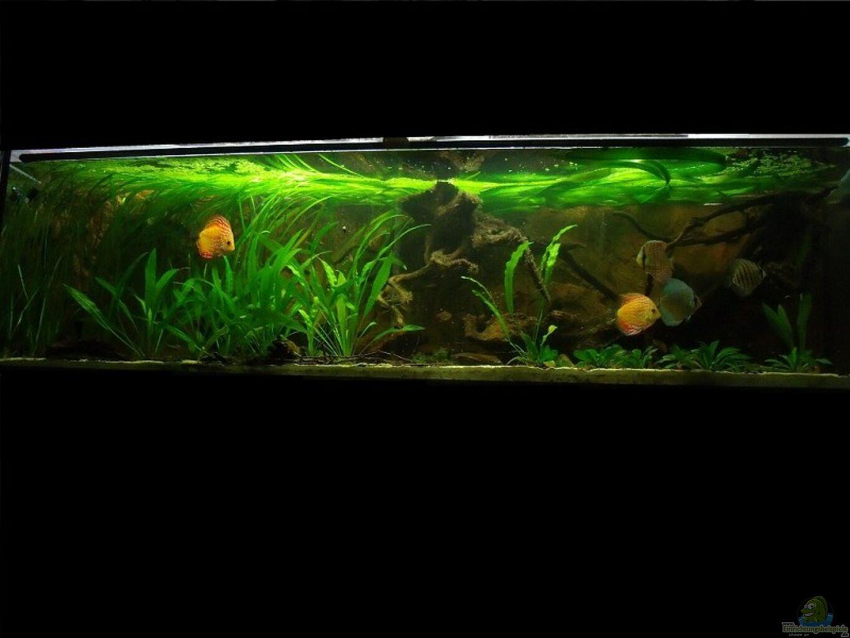 aquarium von ph neutral ppis flussbett. Black Bedroom Furniture Sets. Home Design Ideas