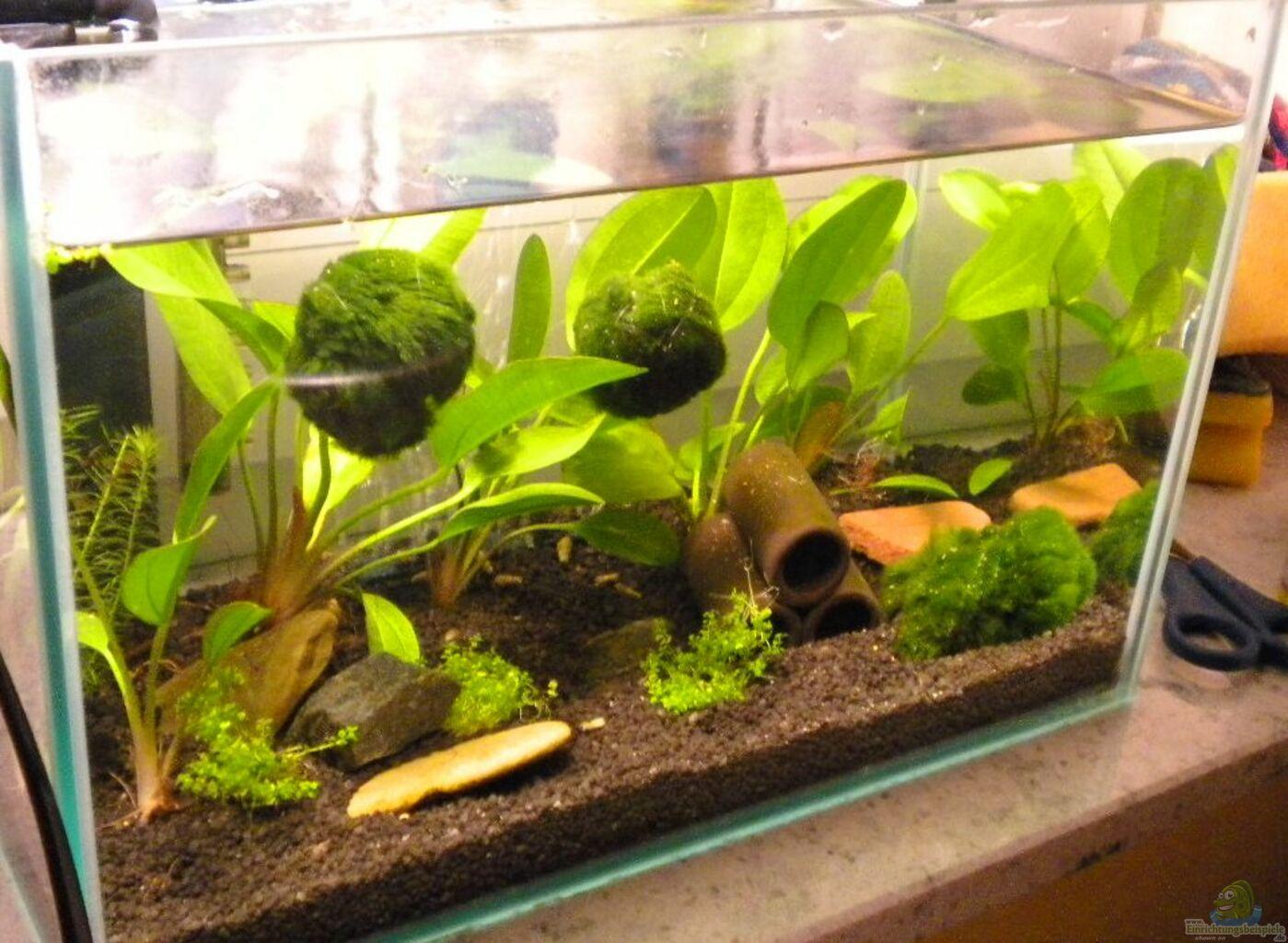 aquarium von marci kleines wirbellosenbecken. Black Bedroom Furniture Sets. Home Design Ideas