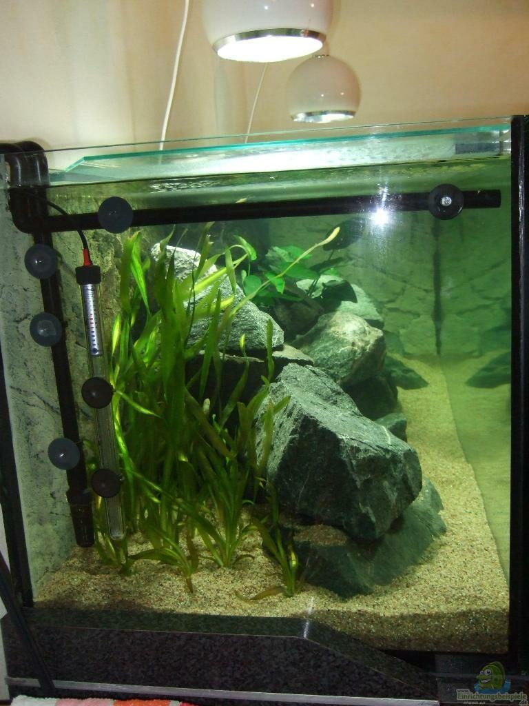 aquarium von stephan wiecha becken 18425. Black Bedroom Furniture Sets. Home Design Ideas