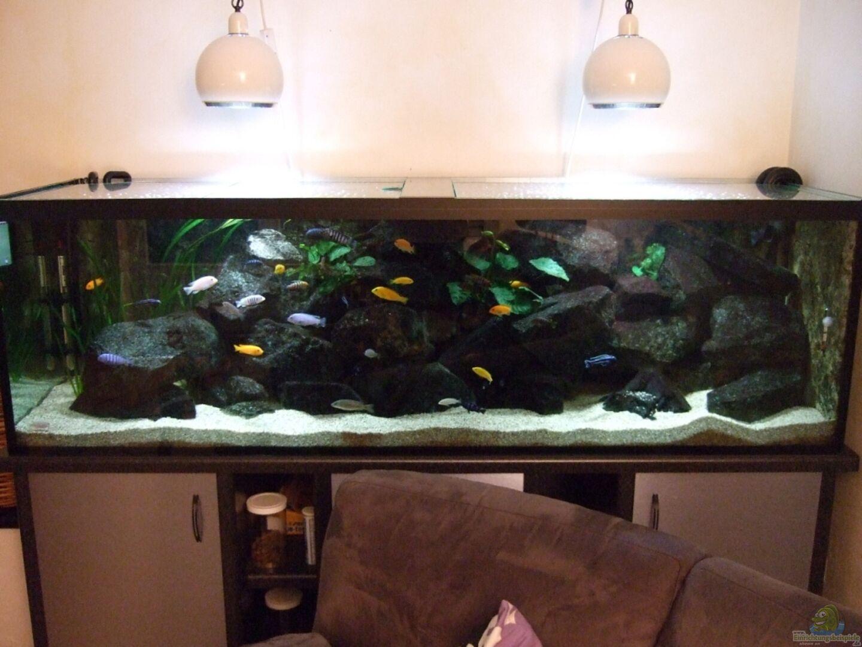 aquarium von crenii becken 18425. Black Bedroom Furniture Sets. Home Design Ideas