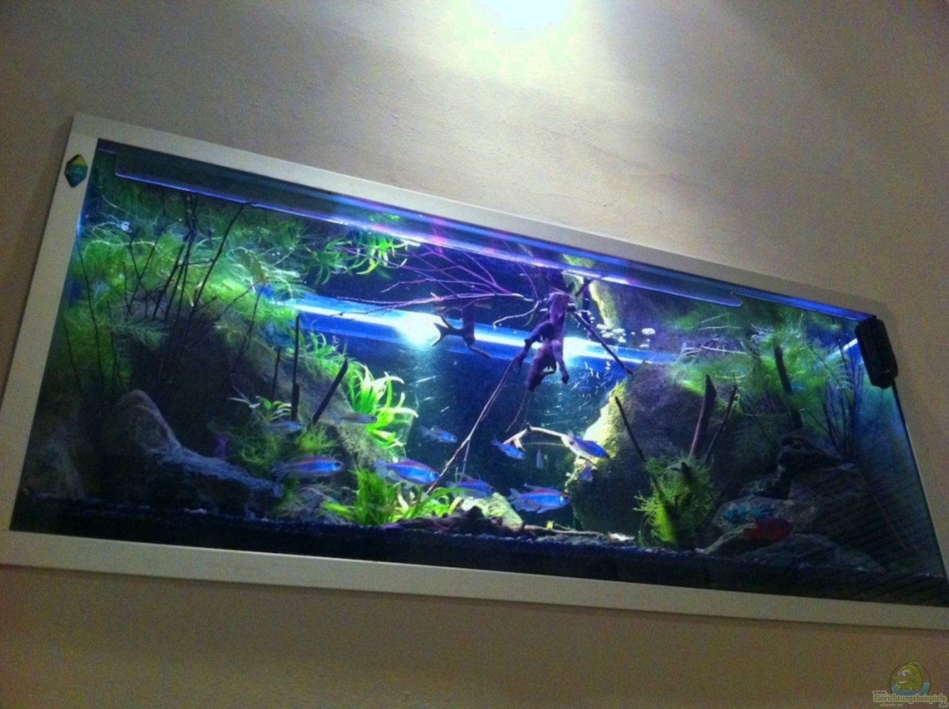 Aquarium von h is black pearl - Aquarium in der wand ...