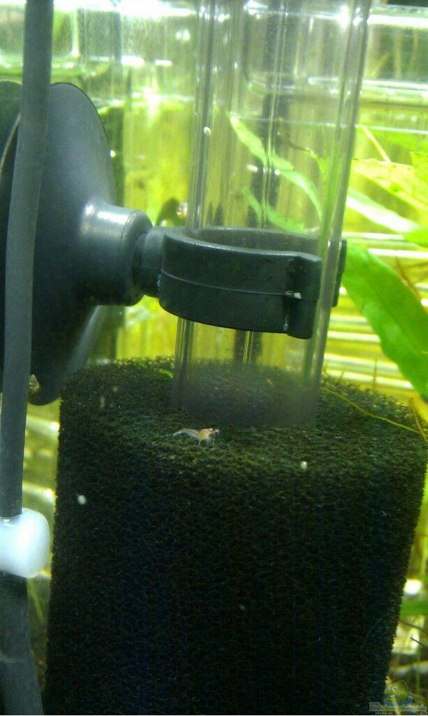 aquarium von achim sakura garnelen nanocube. Black Bedroom Furniture Sets. Home Design Ideas