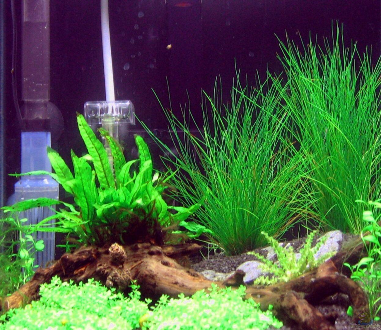aquarium von achim 18476 sakura garnelen nanocube. Black Bedroom Furniture Sets. Home Design Ideas