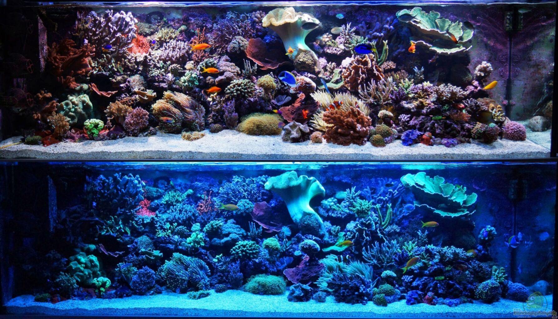 bersicht ber die aquariumbilder aus den 8605 beispielen seite 261. Black Bedroom Furniture Sets. Home Design Ideas