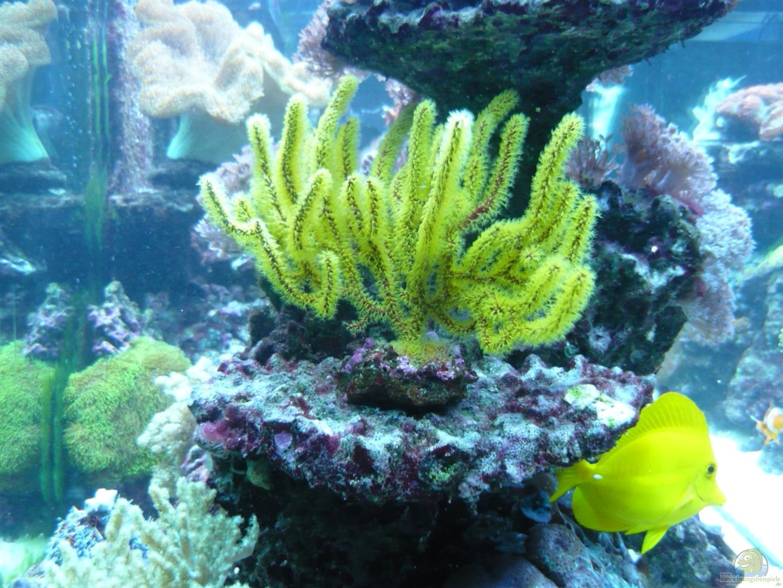 aquarium von theno 18503 no s reef. Black Bedroom Furniture Sets. Home Design Ideas