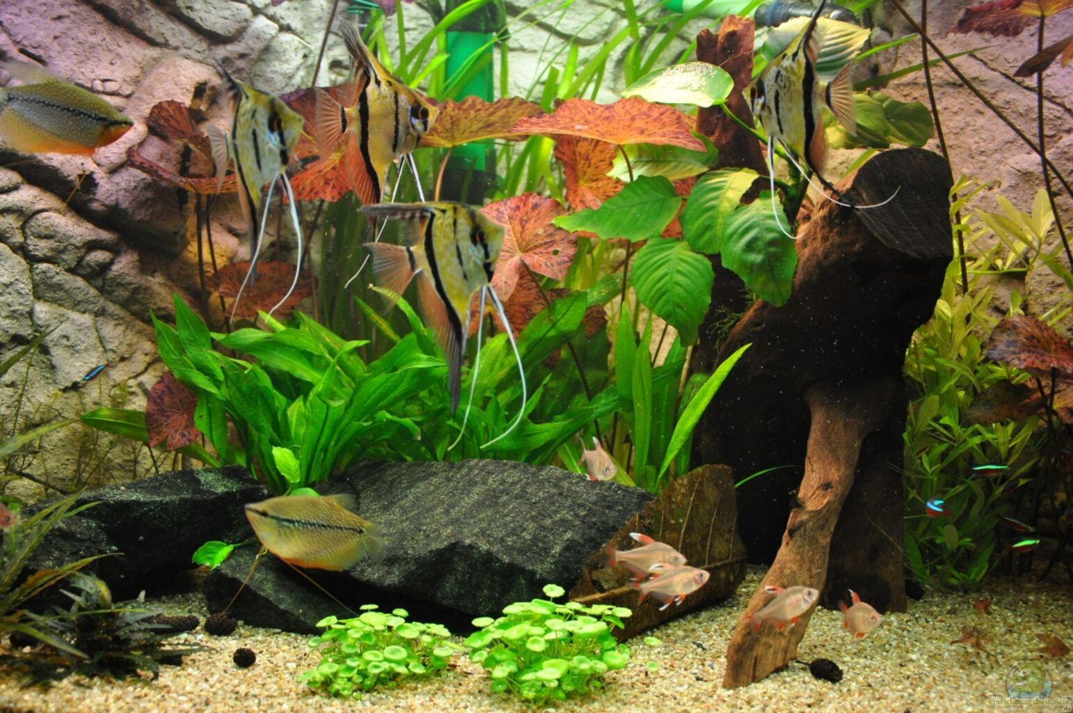 Aquarium von jmvitt woha meta for Skalar aquarium