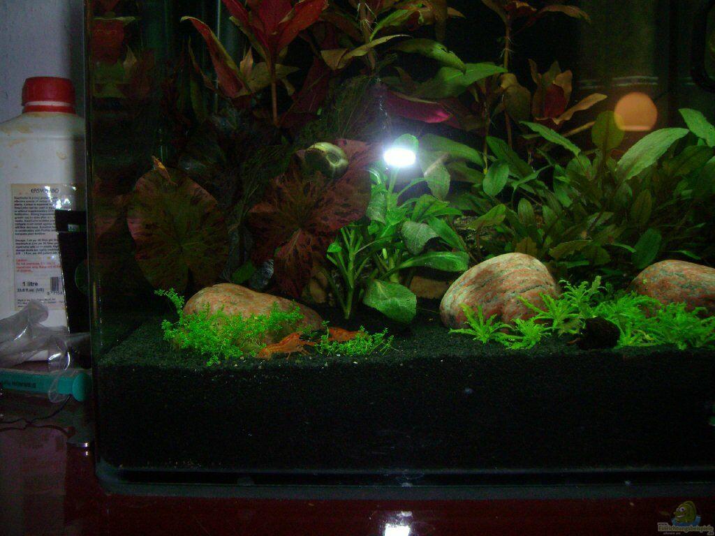 aquarien mit cambarellus arten zwergflusskrebse. Black Bedroom Furniture Sets. Home Design Ideas
