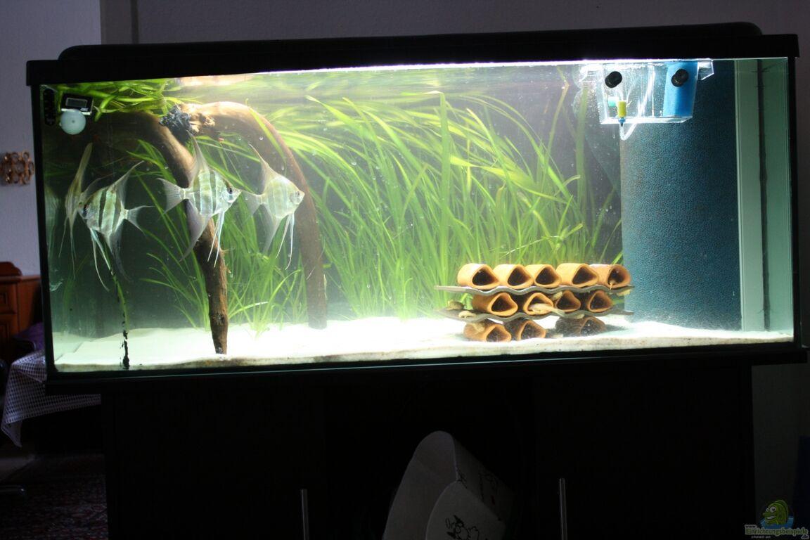 Aquarium von Panda  Kleines S u00fcdamerika