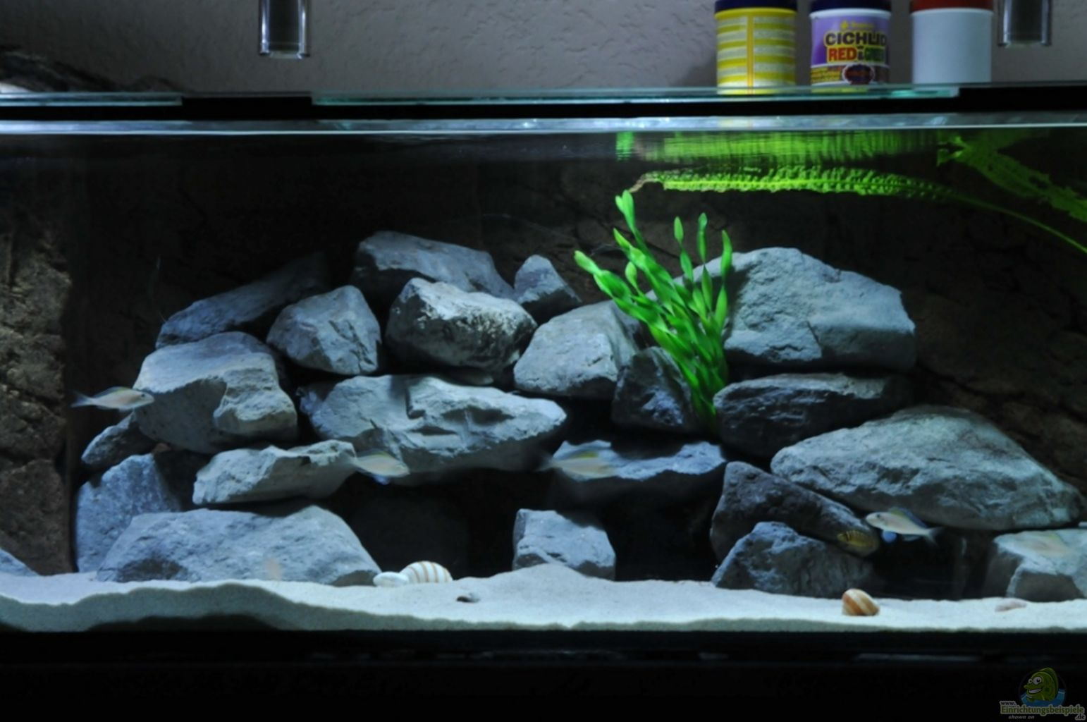 aquarium von lars schnabel becken 18578. Black Bedroom Furniture Sets. Home Design Ideas
