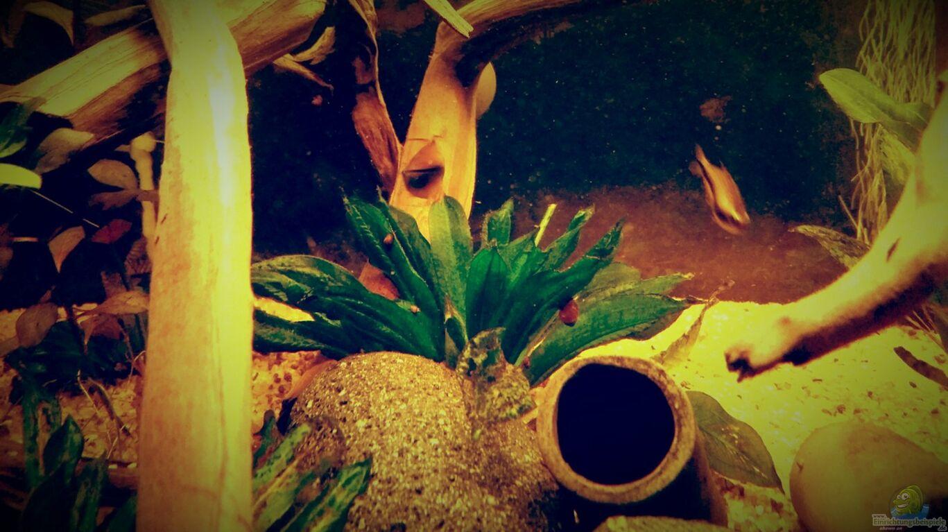 pflanzen im aquarium amazonas regenzeit aus amazonas regenzeit von aquafr34k. Black Bedroom Furniture Sets. Home Design Ideas