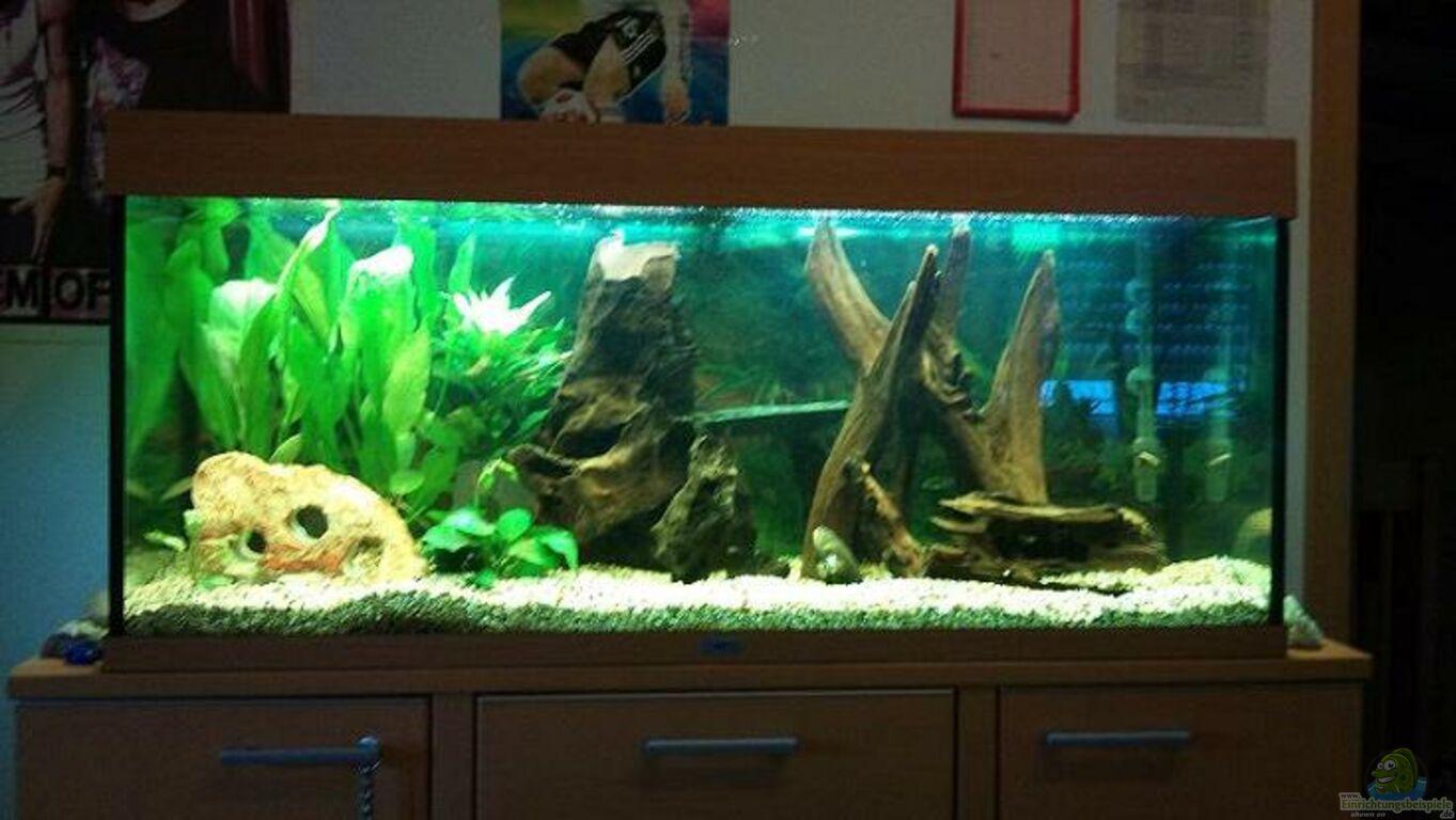 Aquarium von markus pisarek juwel 300l for Aquarium einrichtung