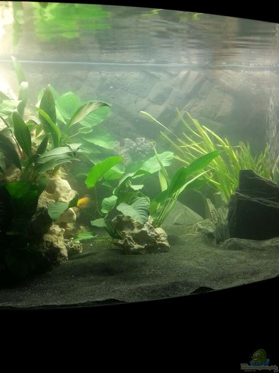 aquarium von volker kleiner malawisee. Black Bedroom Furniture Sets. Home Design Ideas