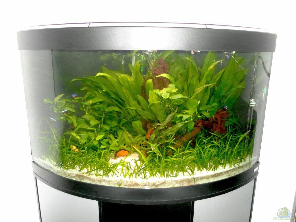 aquarium von mawi fluval venezia 190. Black Bedroom Furniture Sets. Home Design Ideas