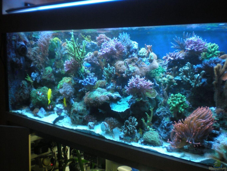 Aquarium von frank haipeter becken 18763 for Aquarium becken