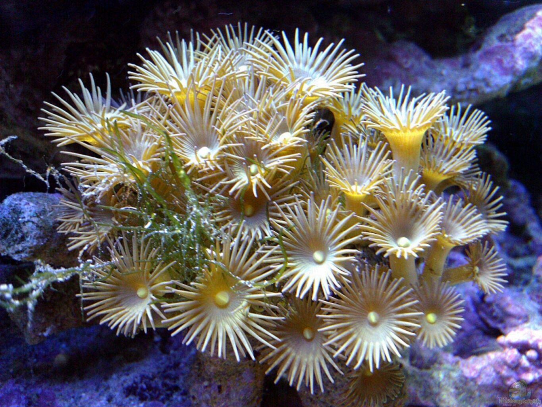 Plafoniere Led Per Nanoreef : Primo nanoreef litri forum acquariofilia facile allestimento
