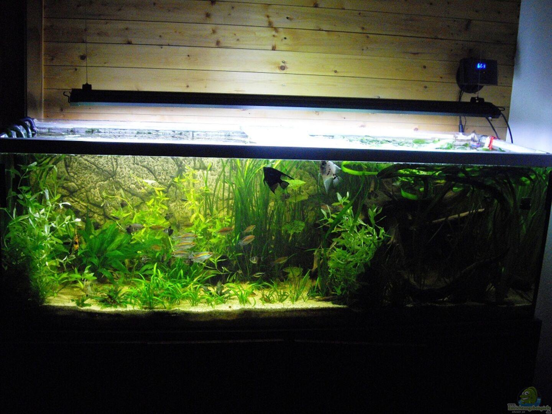 aquarium hauptansicht von fischsuppe aus fischsuppe von yvonne storms. Black Bedroom Furniture Sets. Home Design Ideas