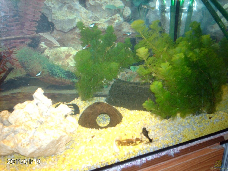 aquarium von elbfan 18882 unser kleines becken. Black Bedroom Furniture Sets. Home Design Ideas