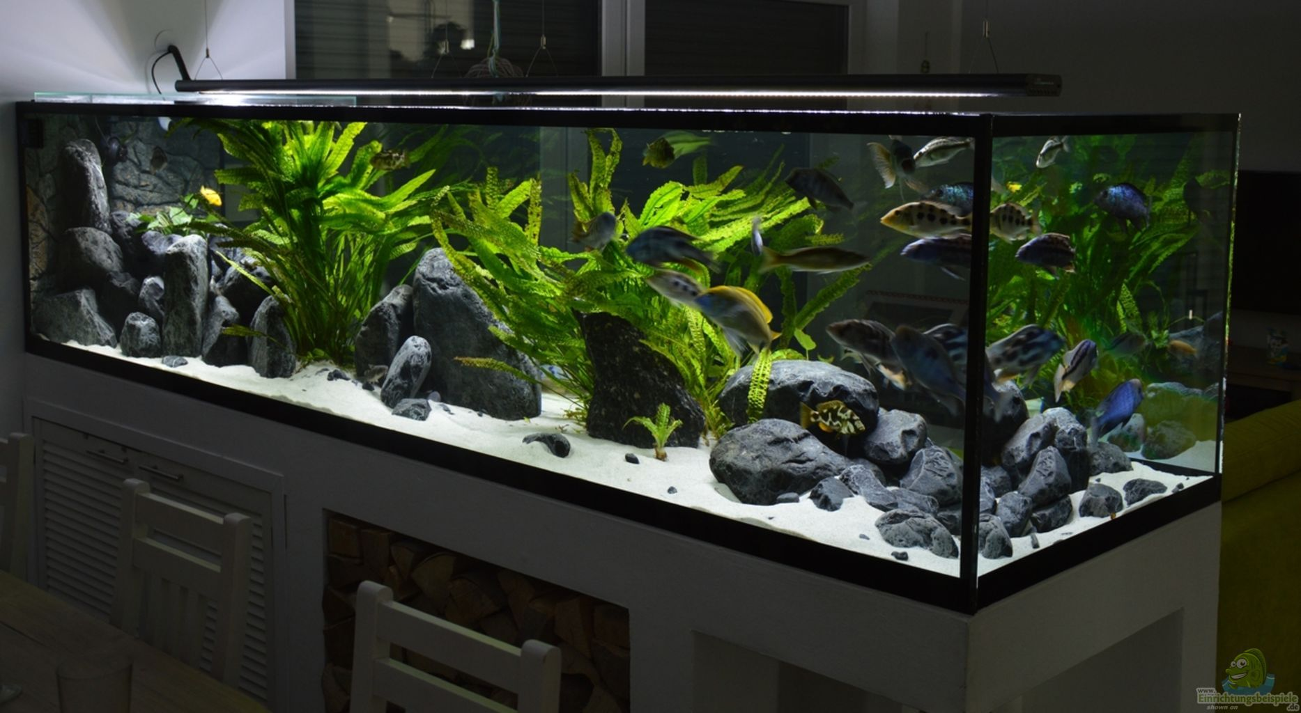 Example no 18908 from the category lake malawi - Decor aquarium cichlides ...