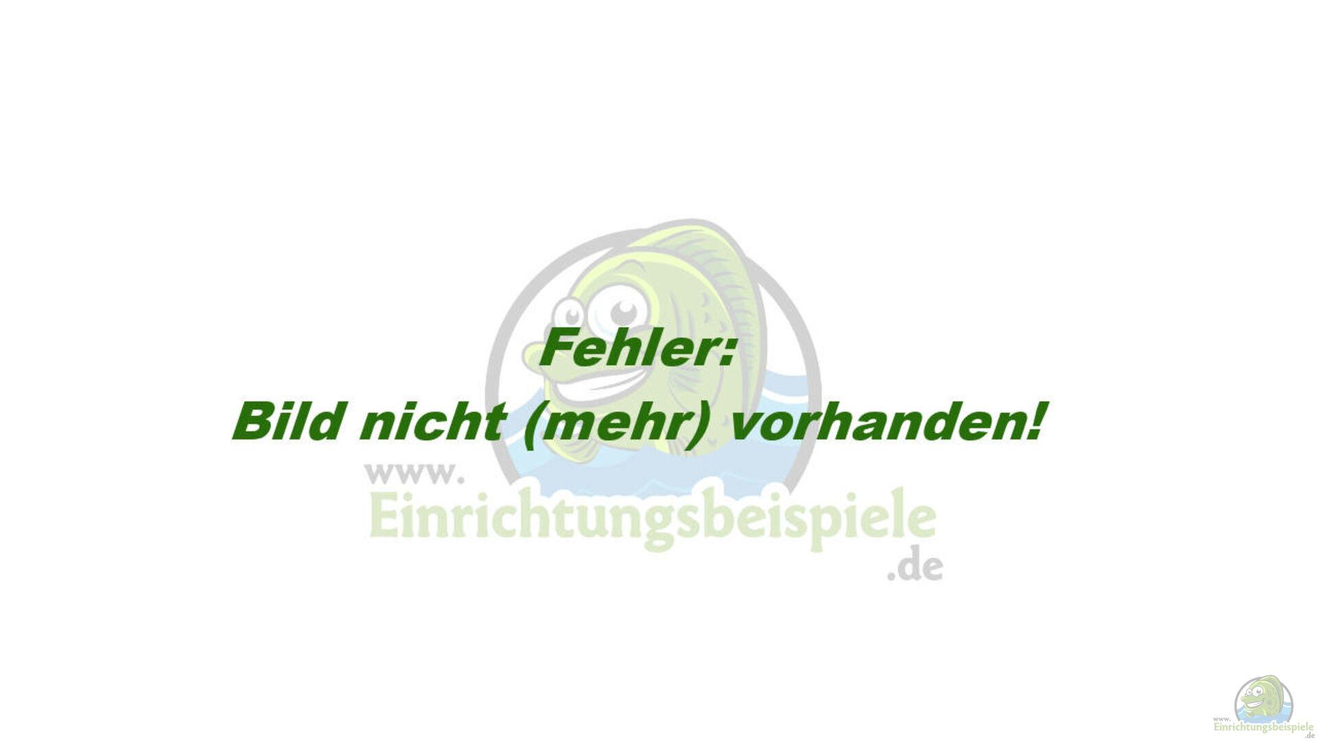 Schematische Darstellung Filterbecken aus Malawi Predator Bay von ...