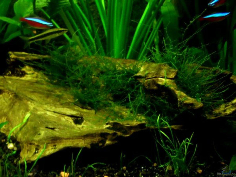 Dekotation Im Aquarium Dschungelcamp Nur Noch Als Beispiel