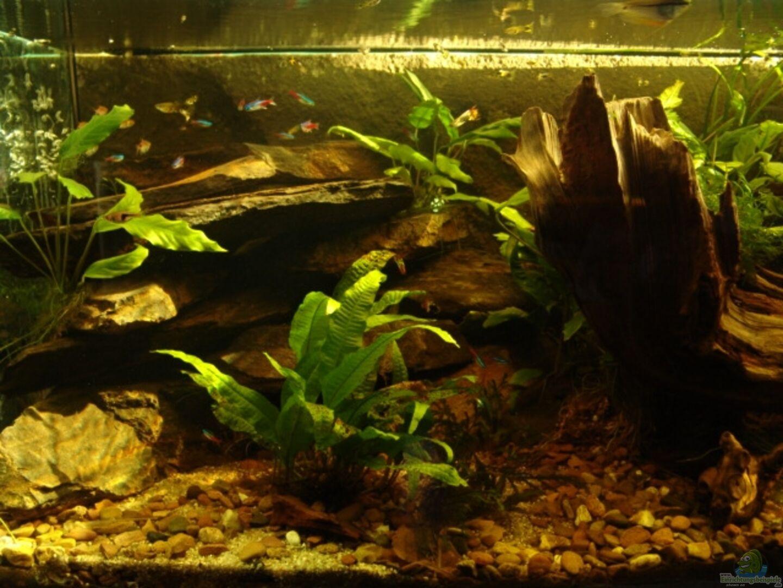 aquarium von peer wojtkowiak becken 18947. Black Bedroom Furniture Sets. Home Design Ideas