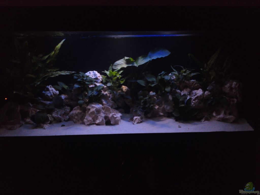 Aquarium von mr malawi demasoni s paradise for Aquarium 120x40x50