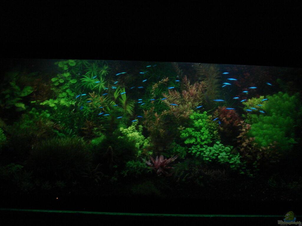aquarium von achim cool traum in weiss. Black Bedroom Furniture Sets. Home Design Ideas