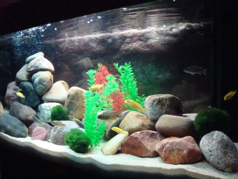 aquarium von holger busse malawi 200 liter. Black Bedroom Furniture Sets. Home Design Ideas