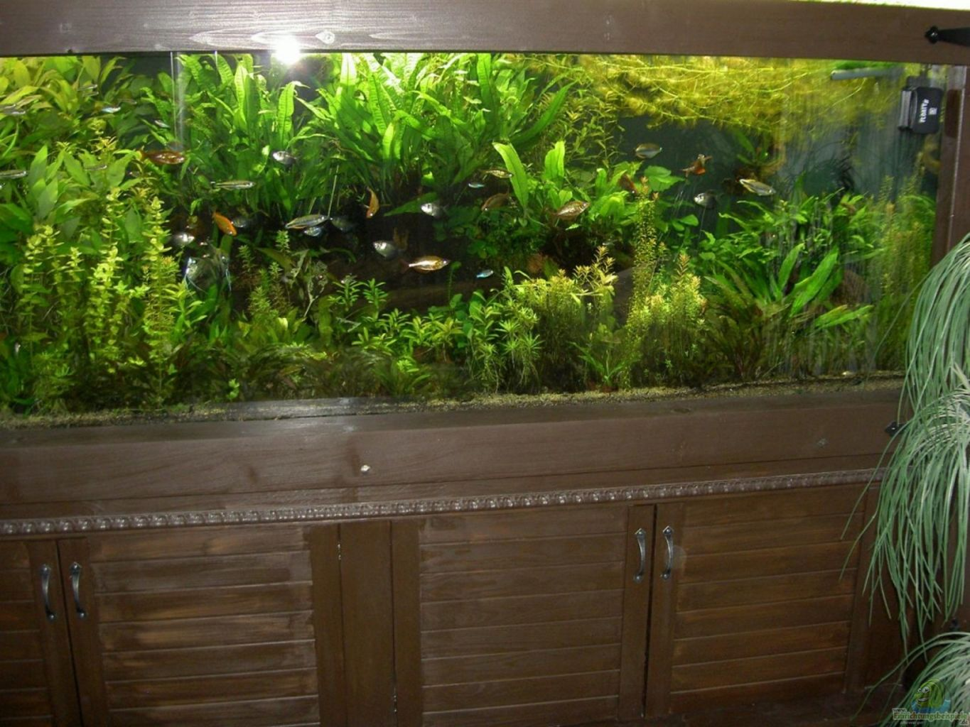 Example no 19069 from the category community tanks for Aquarium 120l