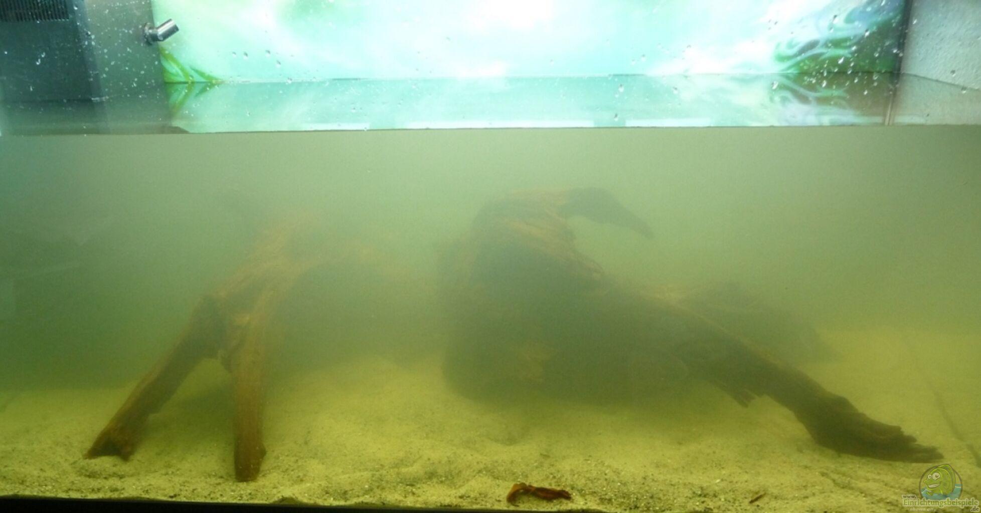 aquarium von cpt frischgem se am grunde des sees. Black Bedroom Furniture Sets. Home Design Ideas