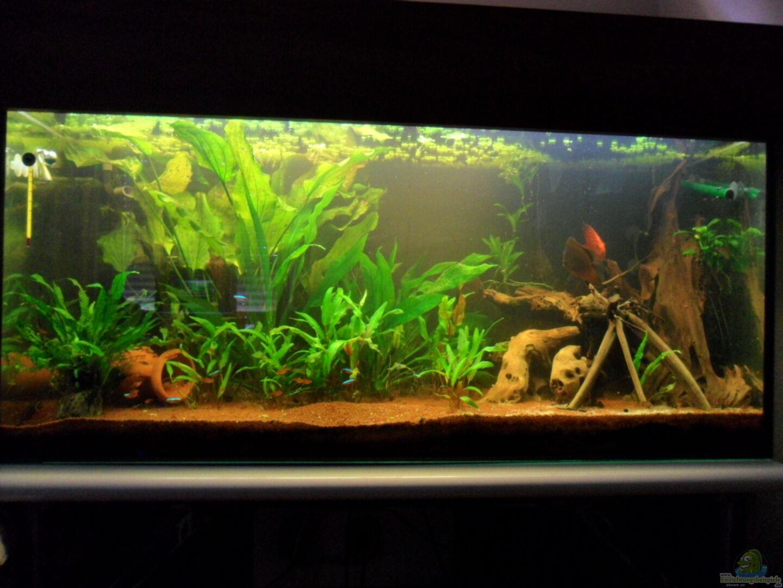 aquarium von masl 19092 nur noch als beispiel. Black Bedroom Furniture Sets. Home Design Ideas