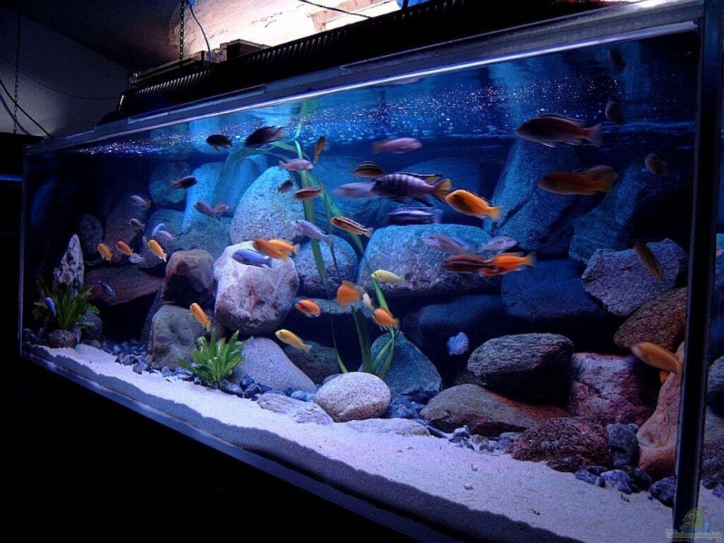 aquarium von helgo jacob becken 1920. Black Bedroom Furniture Sets. Home Design Ideas