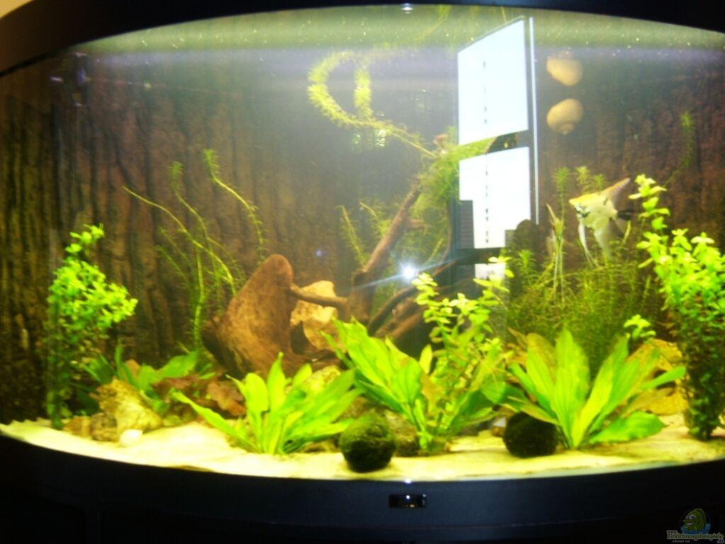 aquarium von matze m juwel trigon 350. Black Bedroom Furniture Sets. Home Design Ideas