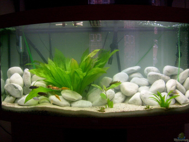 Chrstian seupel juwel aquarium vision 260 mit unterschrank for Aquarium unterschrank