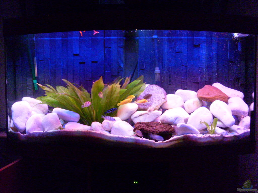 chrstian seupel juwel aquarium vision 260 mit unterschrank. Black Bedroom Furniture Sets. Home Design Ideas