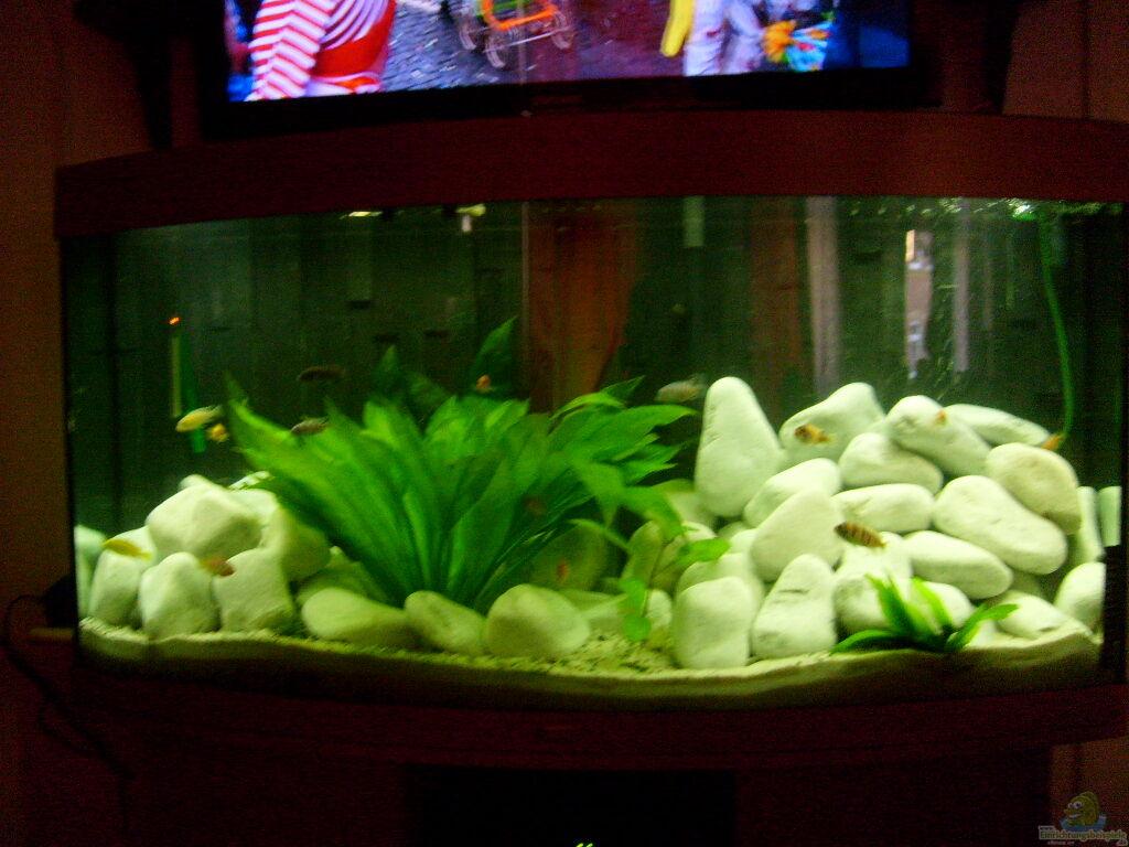 Chrstian seupel juwel aquarium vision 260 mit unterschrank for Aquarium mit unterschrank