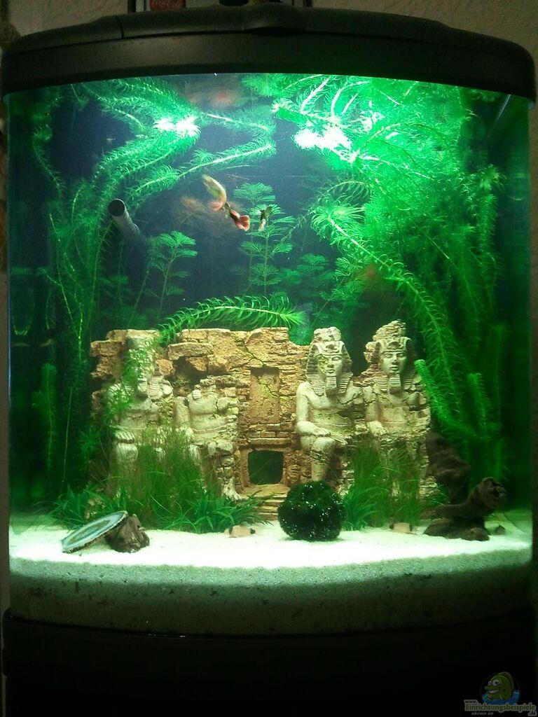 Example no 19241 from the category community tanks for Sera aquarium