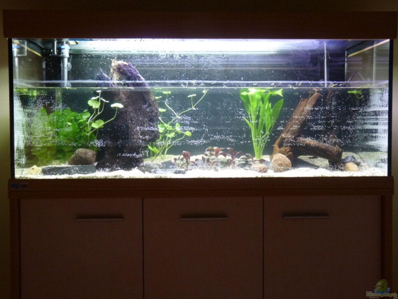 aquarium von steffen s 240er. Black Bedroom Furniture Sets. Home Design Ideas