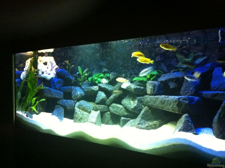 aquarium von meckel meckel s malawi tank. Black Bedroom Furniture Sets. Home Design Ideas