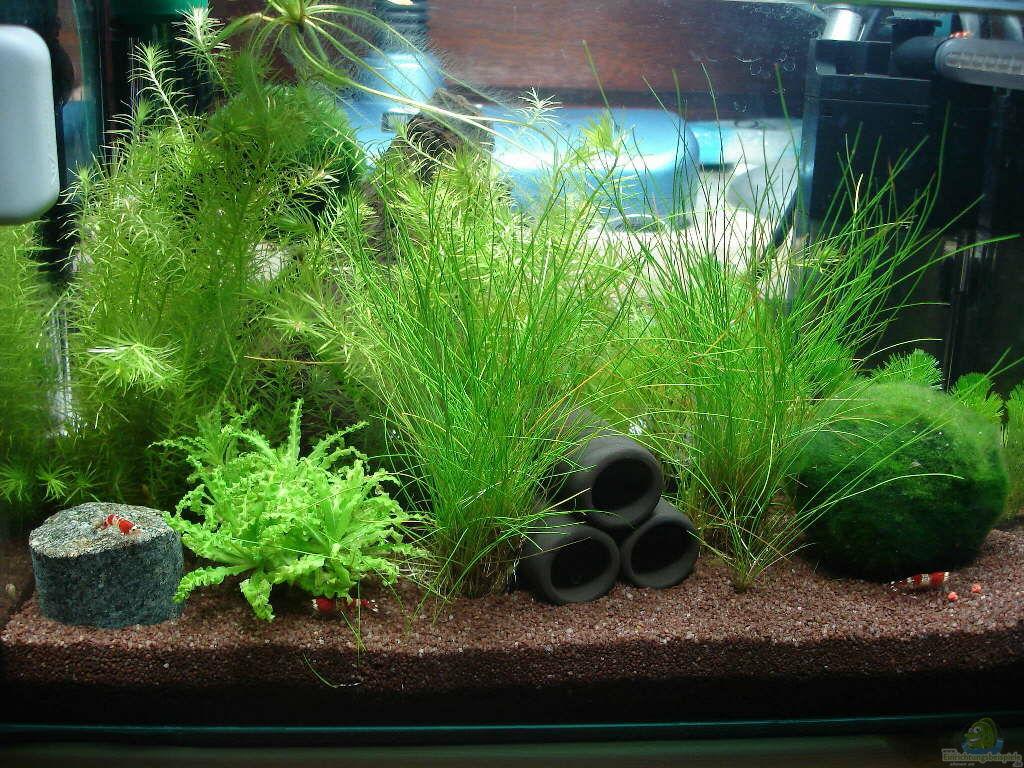 aquarium von timo10 garnelenbecken. Black Bedroom Furniture Sets. Home Design Ideas