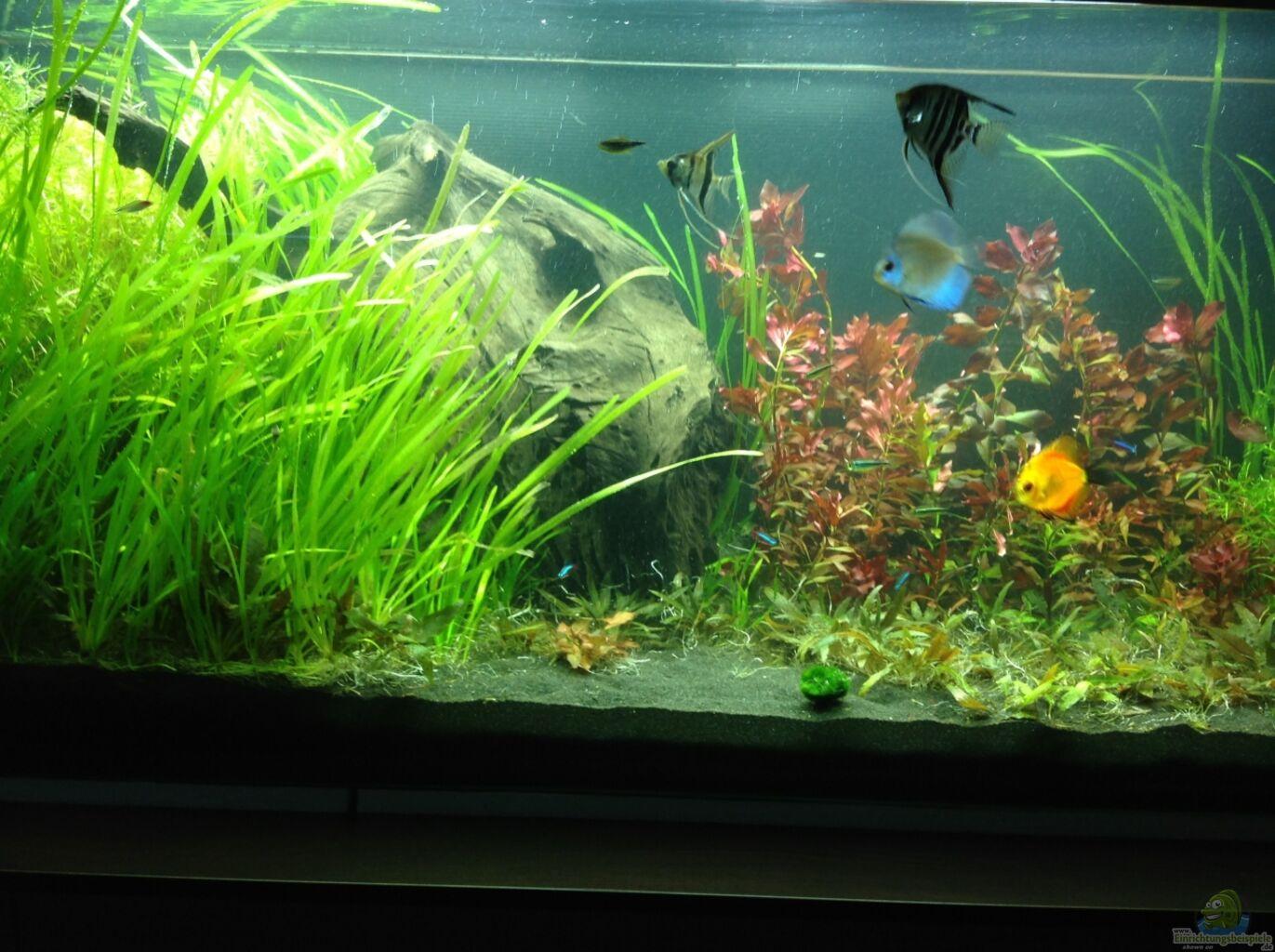 aquarium von marc m mein aquarium