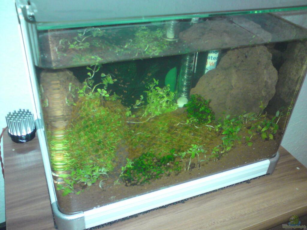 Aquarium von aquamaster cube for Aquarium cube