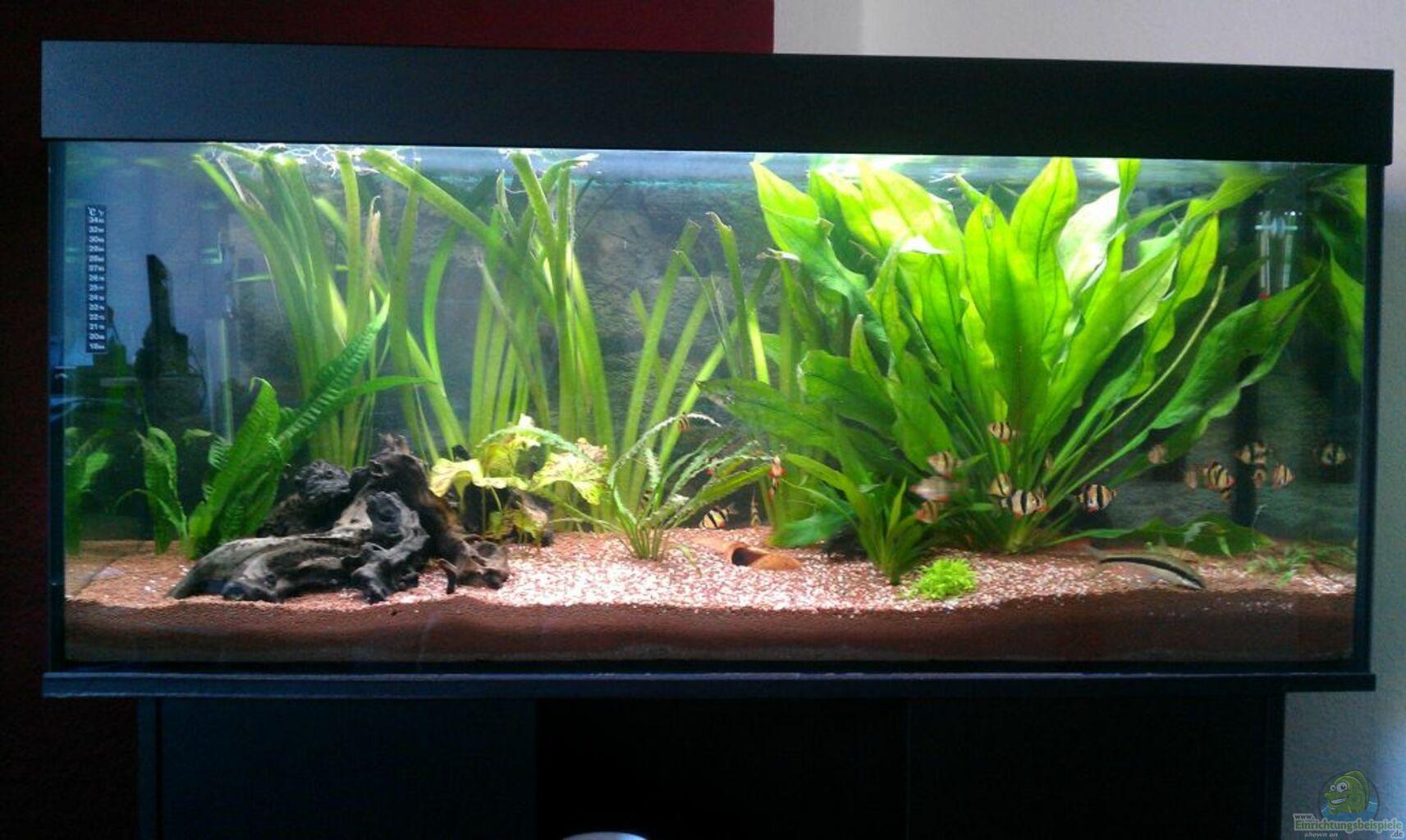 Aquarium von paule mein aquarium for Mein aquarium
