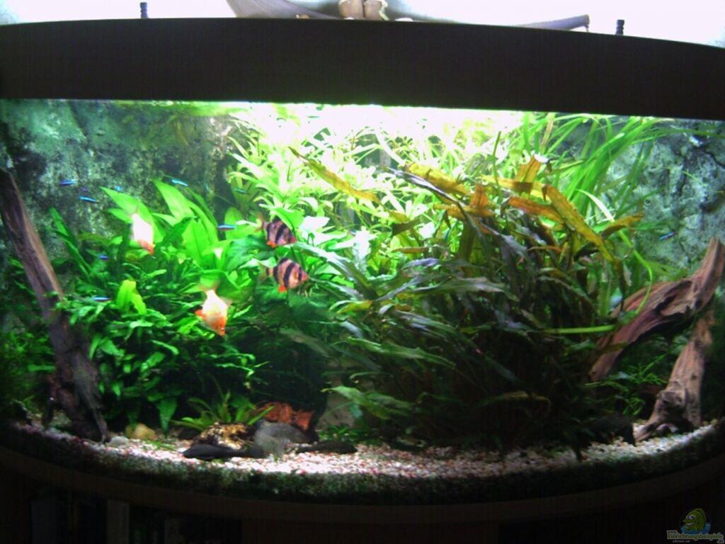 aquarium einrichten anf nger einrichten eines aquariums aquascaping f r anf nger teil 5 auf. Black Bedroom Furniture Sets. Home Design Ideas