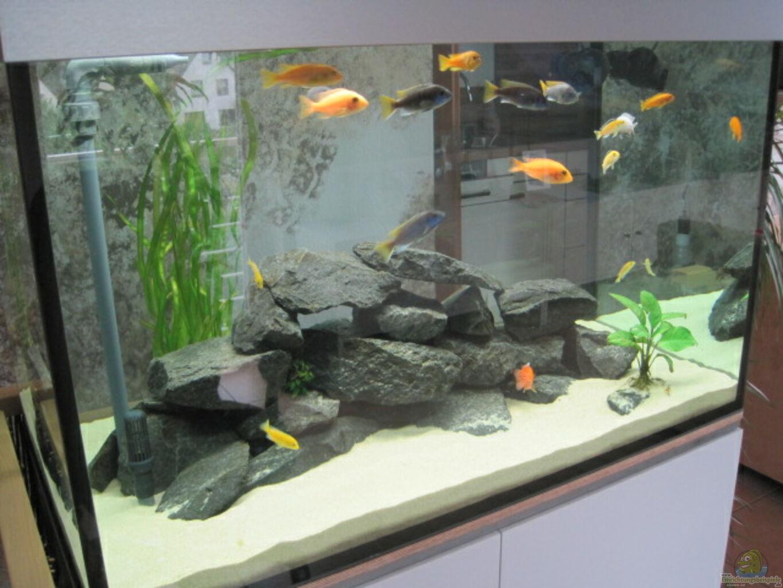 Awesome Aquarium Raumteiler