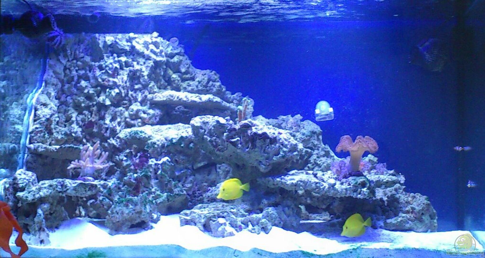 Aquarium von Stephan Grün (19722): Riff@Home